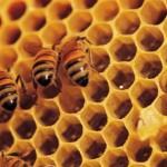 Kenapa madu baik diminum sebelum makan?